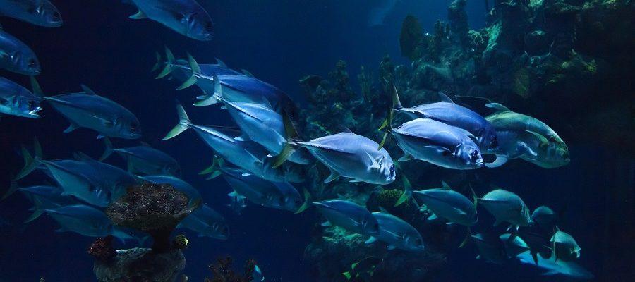 Best Underwater Fishing Camera